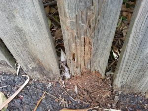 Termite damaged fence